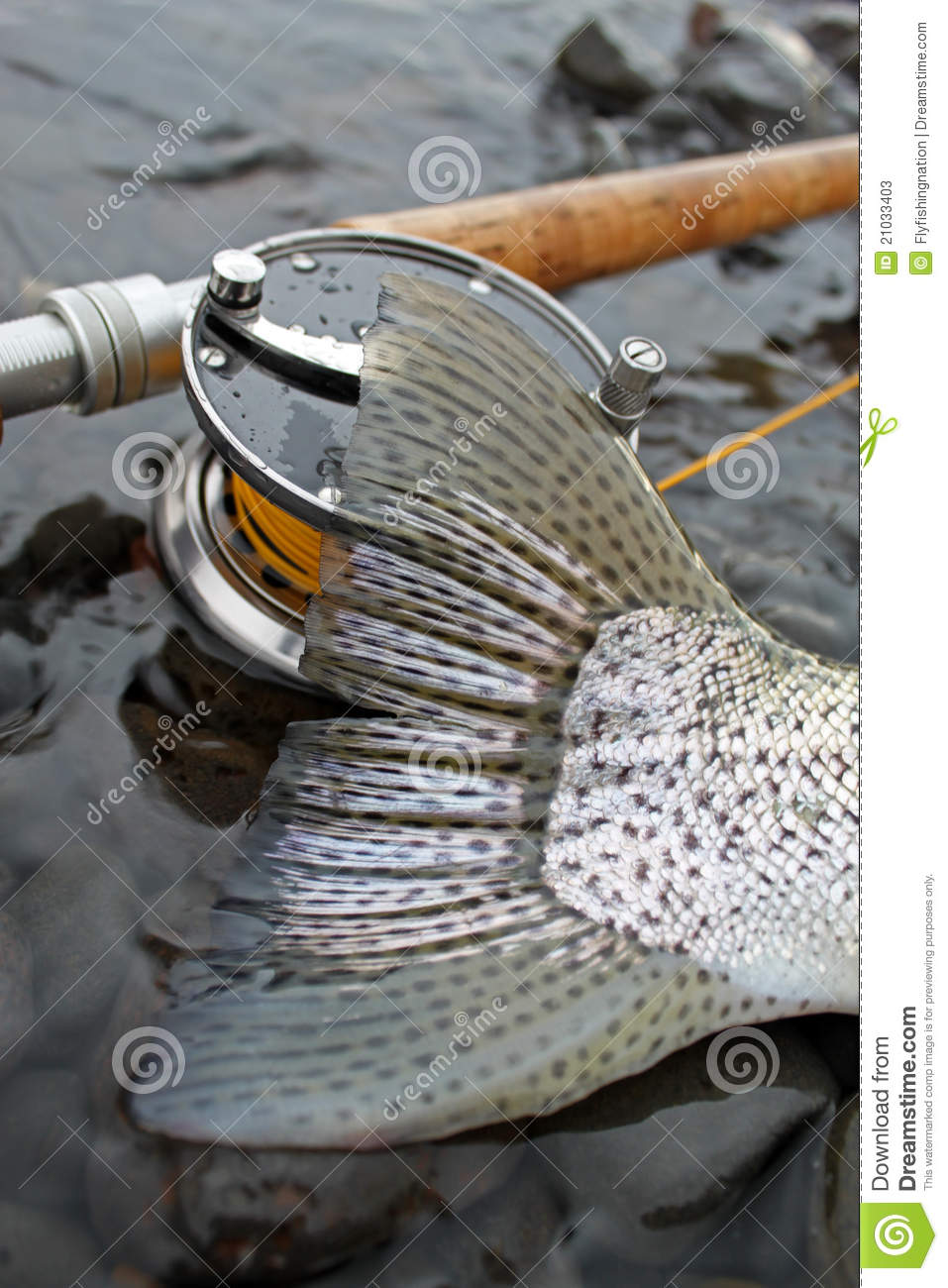 steelhead trout tail fly fishing stock photos - image: 21033403, Fly Fishing Bait