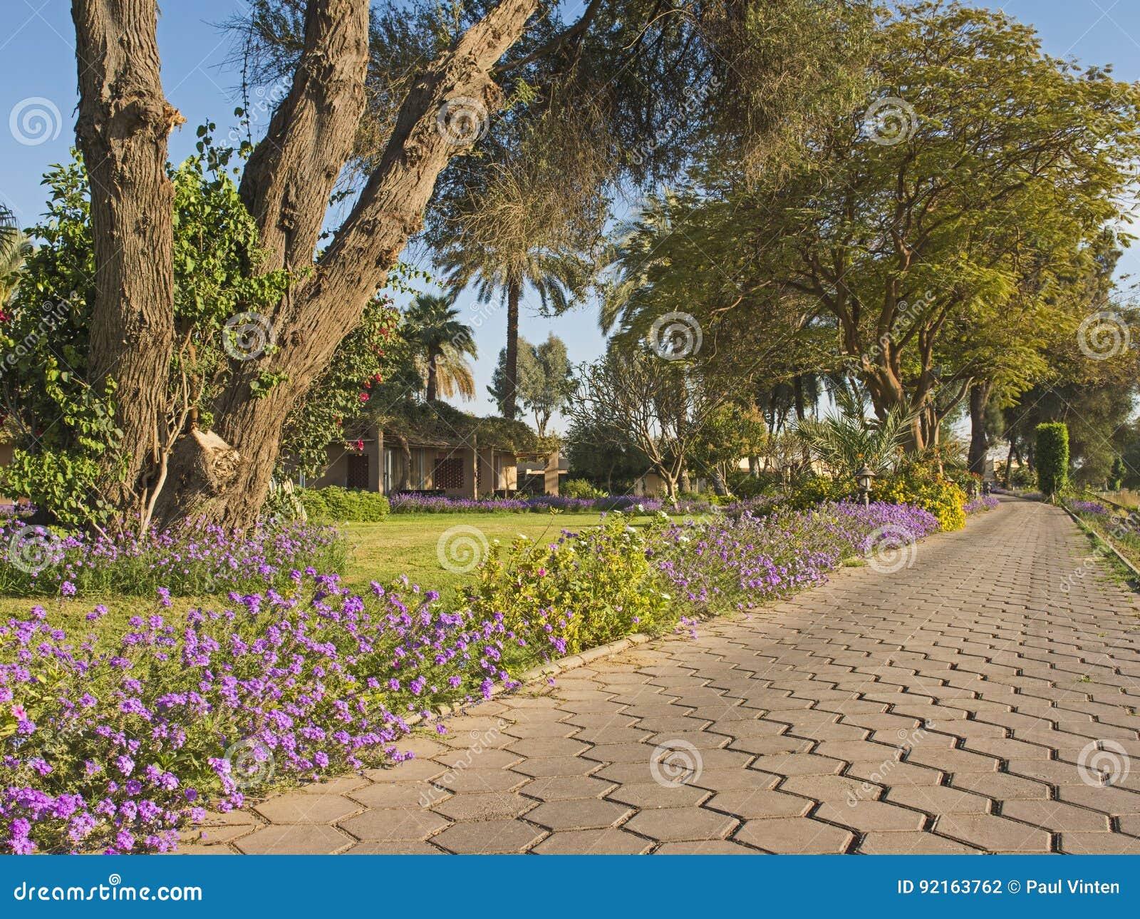 Steenweg Door Tropische Sier Landelijke Tuin Stock Foto Afbeelding