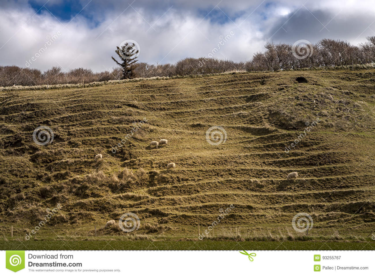 steep hill with sheep grassing and blue sky stock photo image