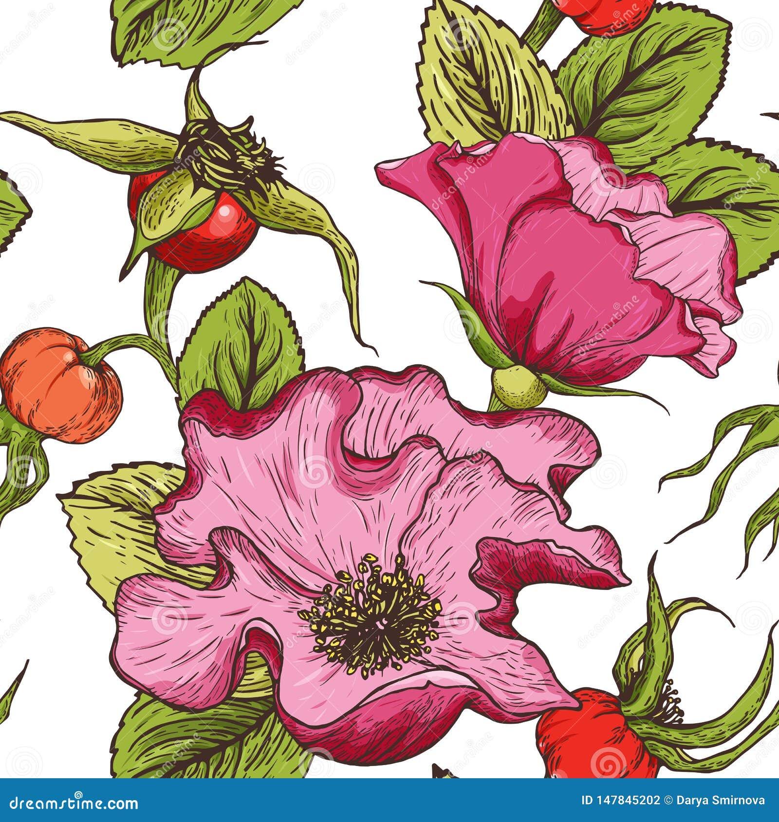 Steg den utdragna sömlösa modellen för handen av färghunden blommor, bär och lövverk som isolerades på en vit bakgrund
