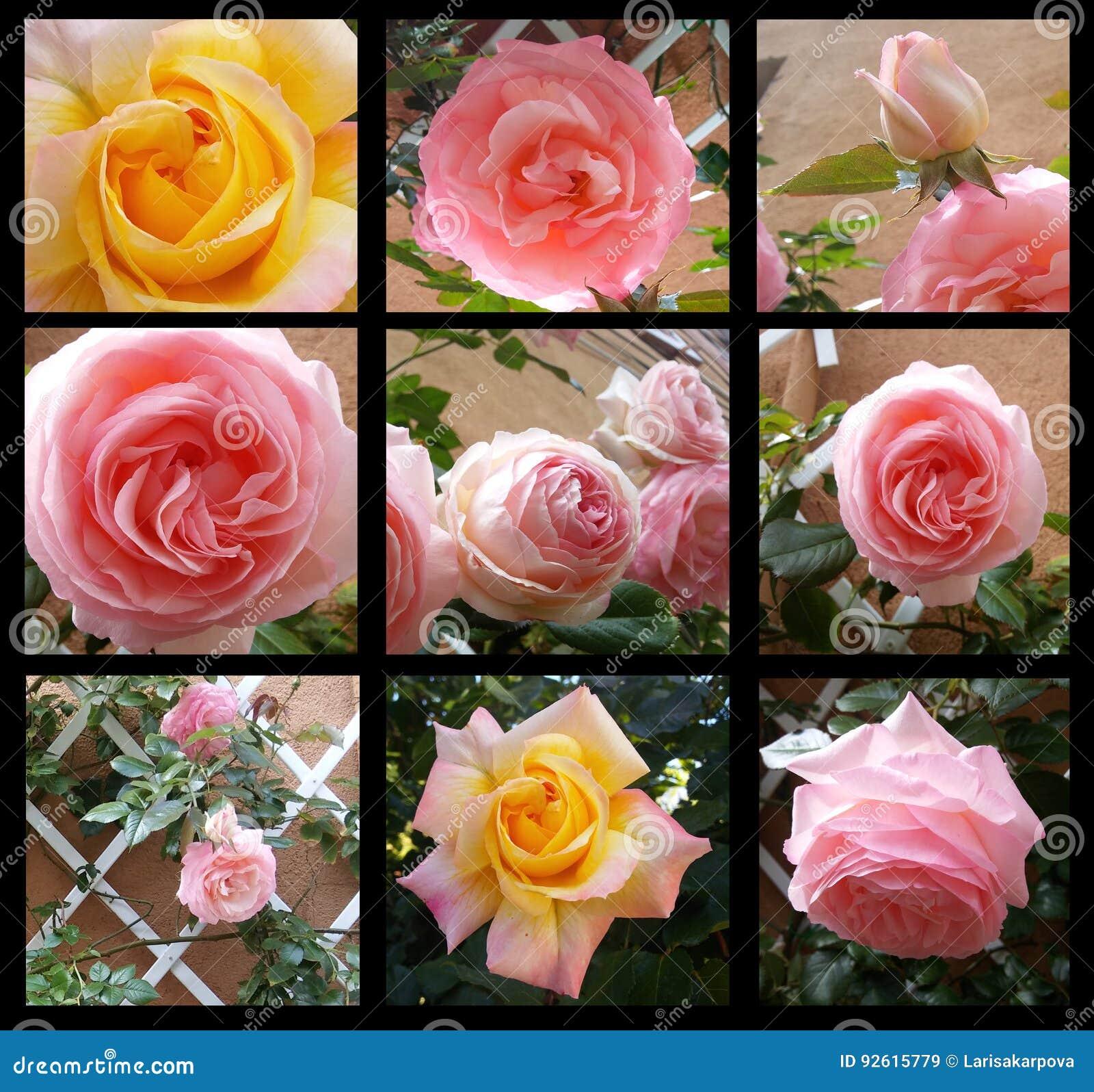 Steg retro älskvärt för blom- ram i dekorativ ramtappningstil