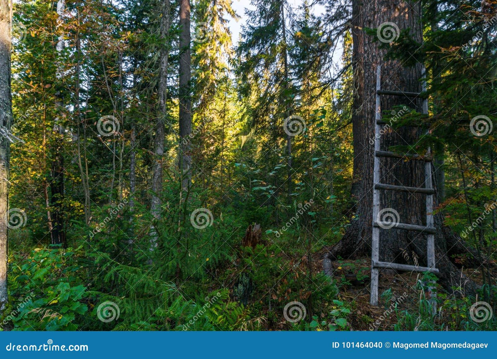 Stege på trädet