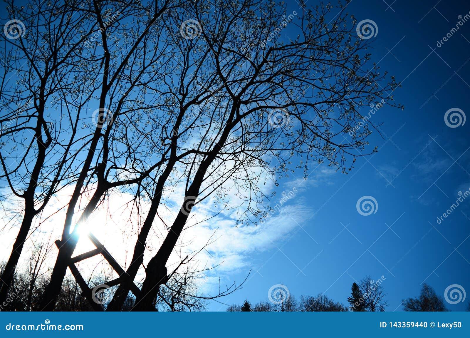 Stege till solen som lutar på träd