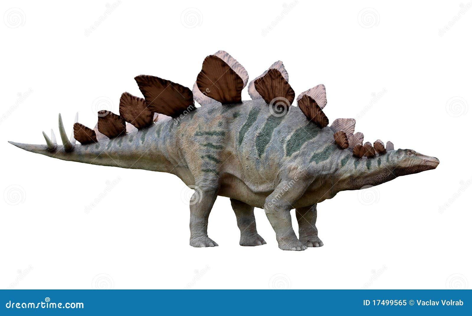 Stegosaurus del dinosaurio