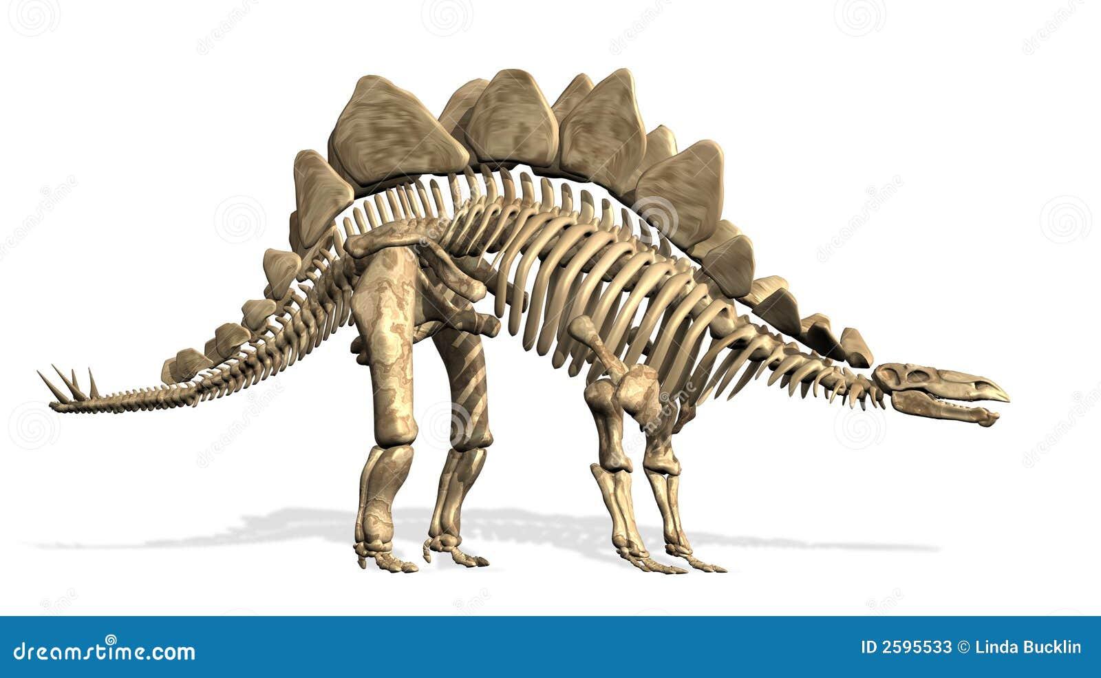 3D render of a stegosaurus skeleton, isloated on white.