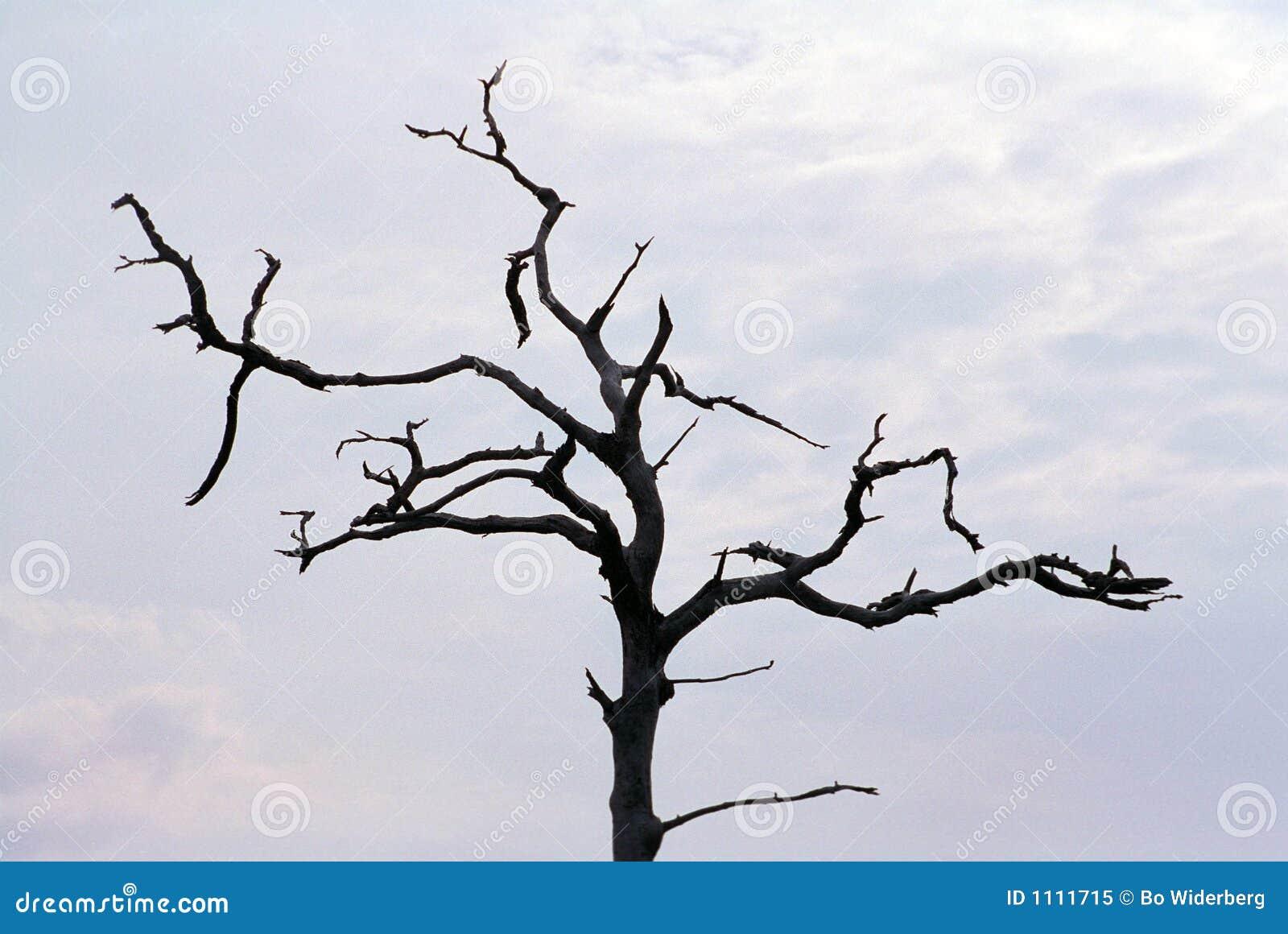 steifer toter baum gegen grauen himmel stockbild bild von baum steif 1111715. Black Bedroom Furniture Sets. Home Design Ideas