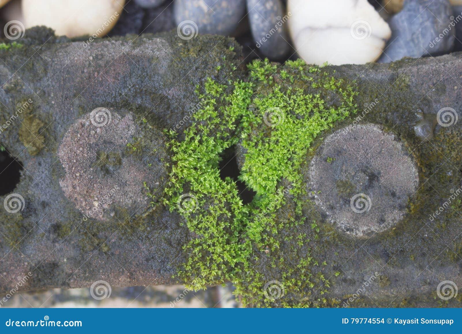 kies im garten, stein schaukelt kies und anlagen im garten stockfoto - bild von, Design ideen