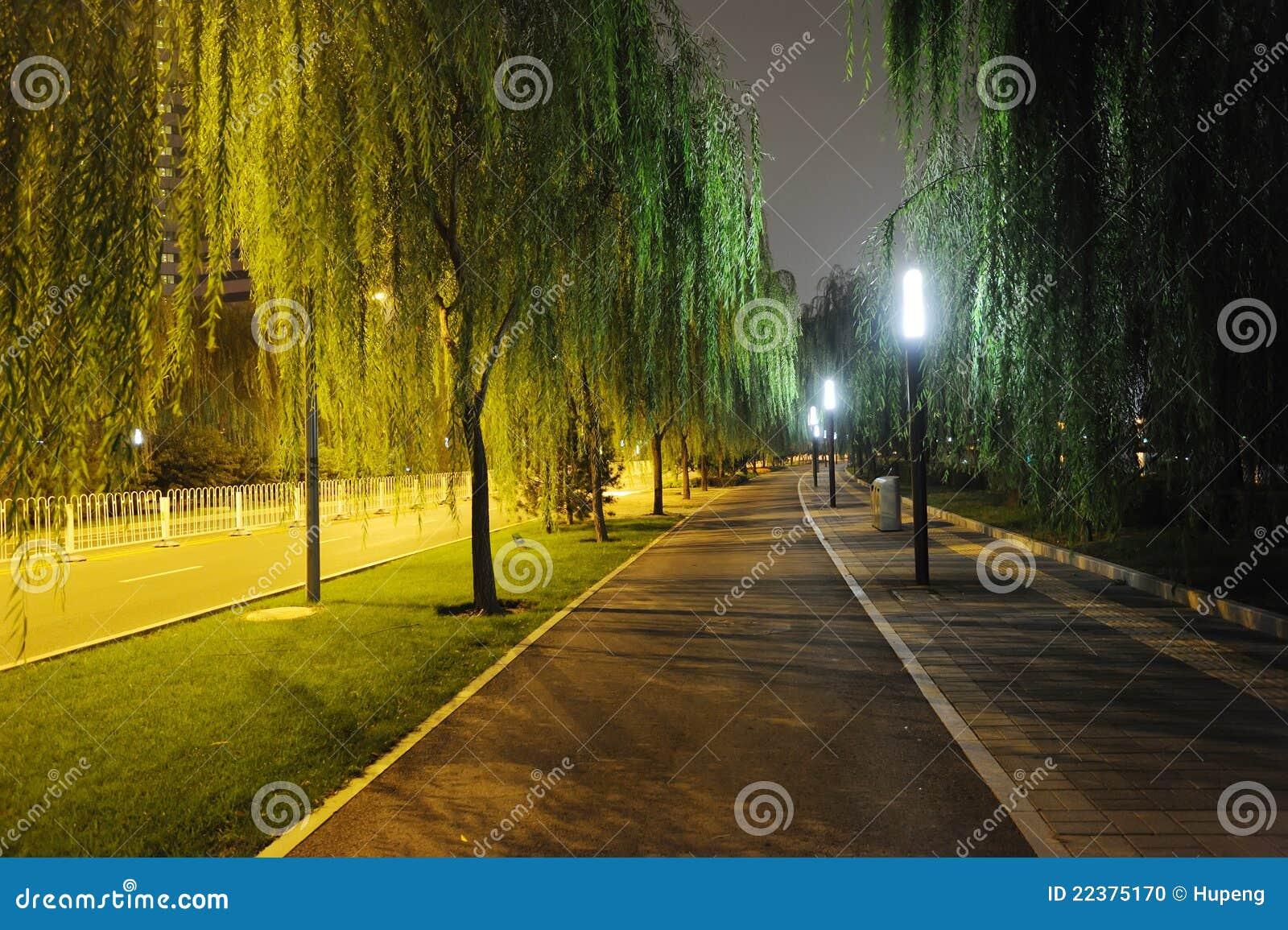 Steinpfad mit Bäumen nachts