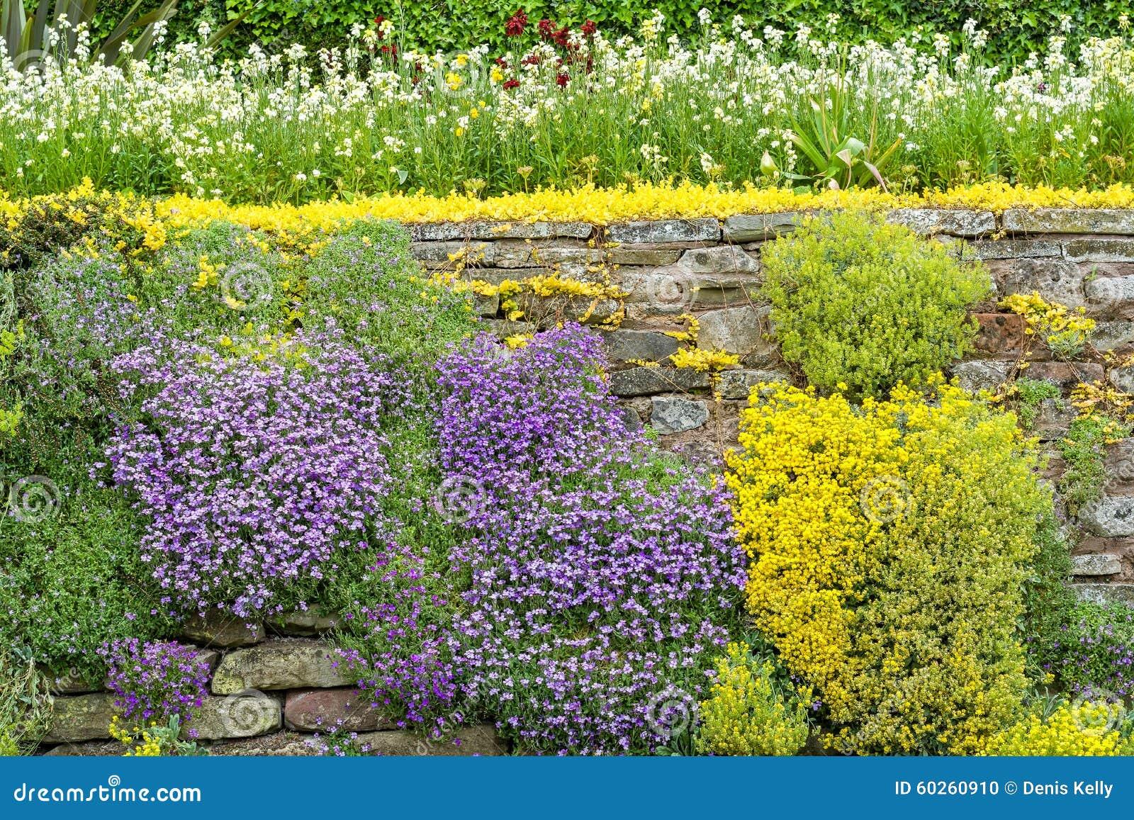 Steinwand Blumen Garten Stockfoto Bild Von Flora Blume 60260910
