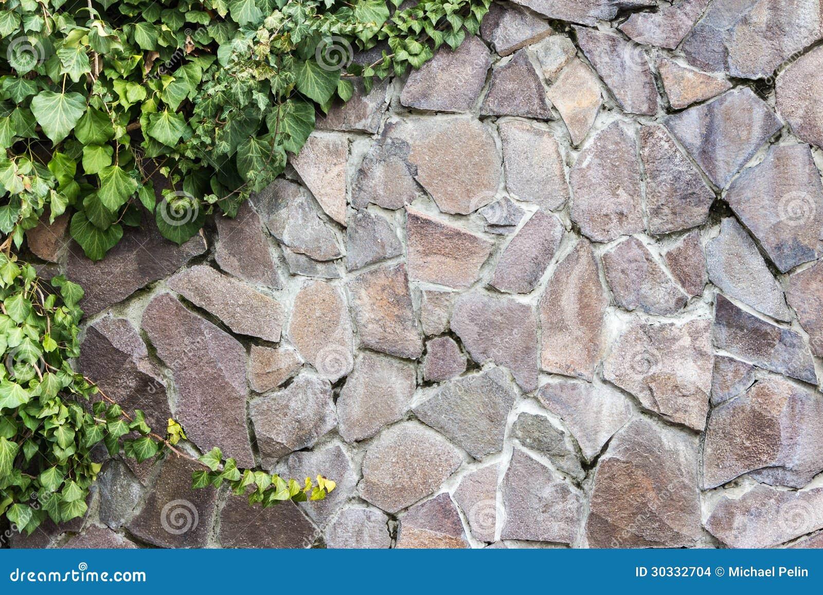 Steinwand Mit Efeu Stockbilder