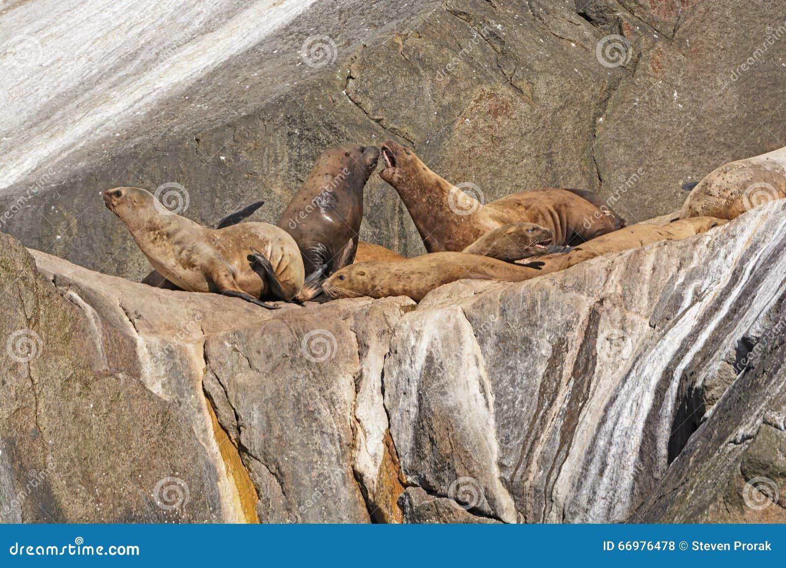 Stelarni Denni lwy dyskutuje na wyspie