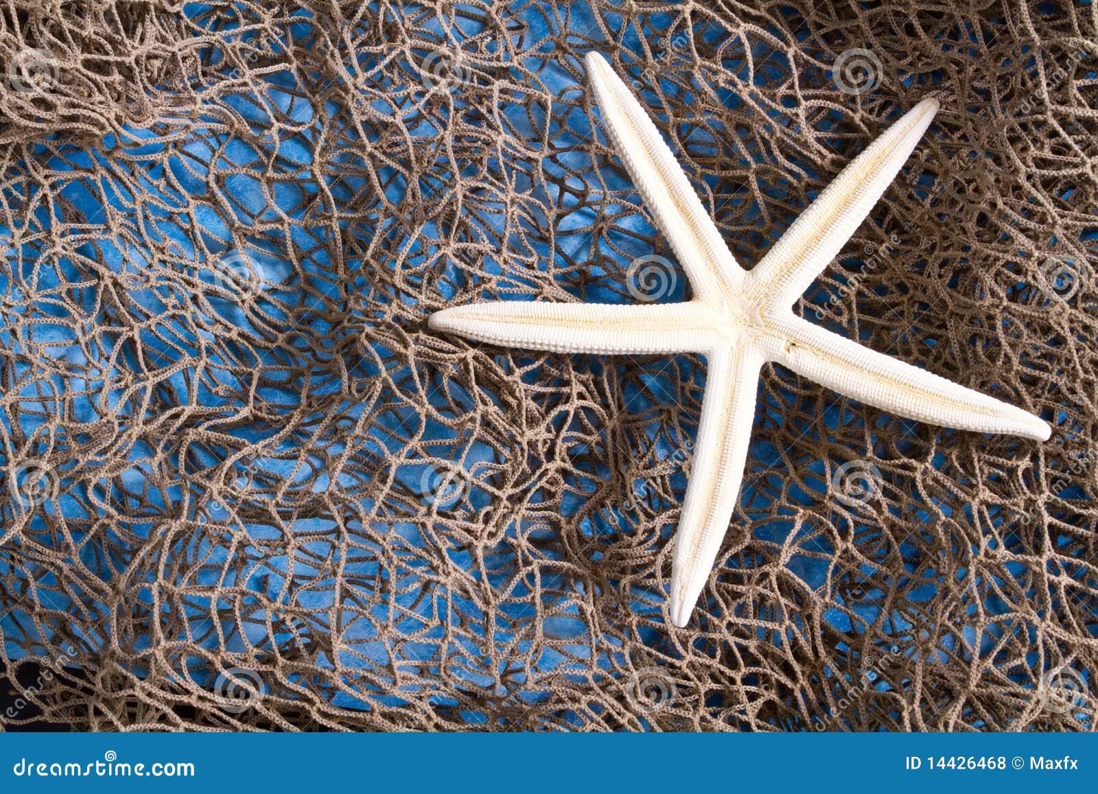 Stella di mare su rete da pesca fotografia stock for Rete da pesca arredamento