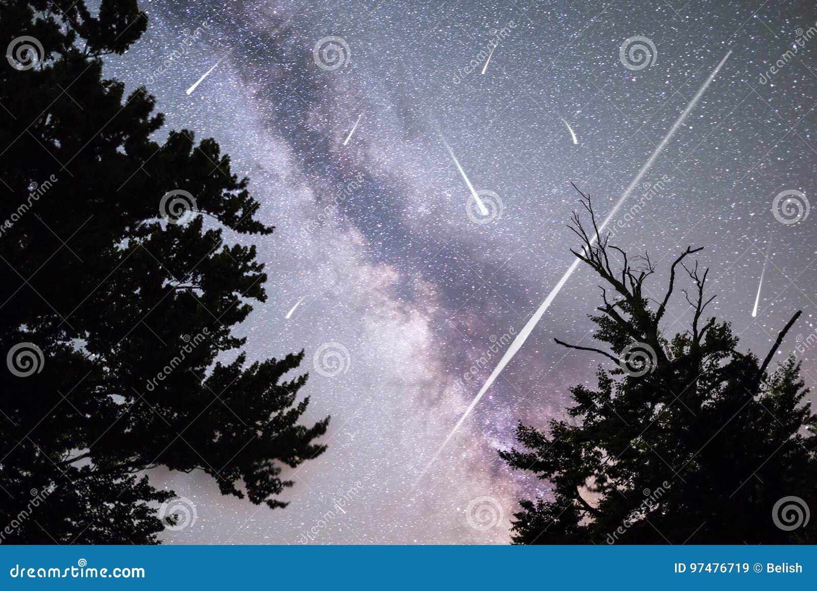 Stelle cadenti della Via Lattea della siluetta dei pini