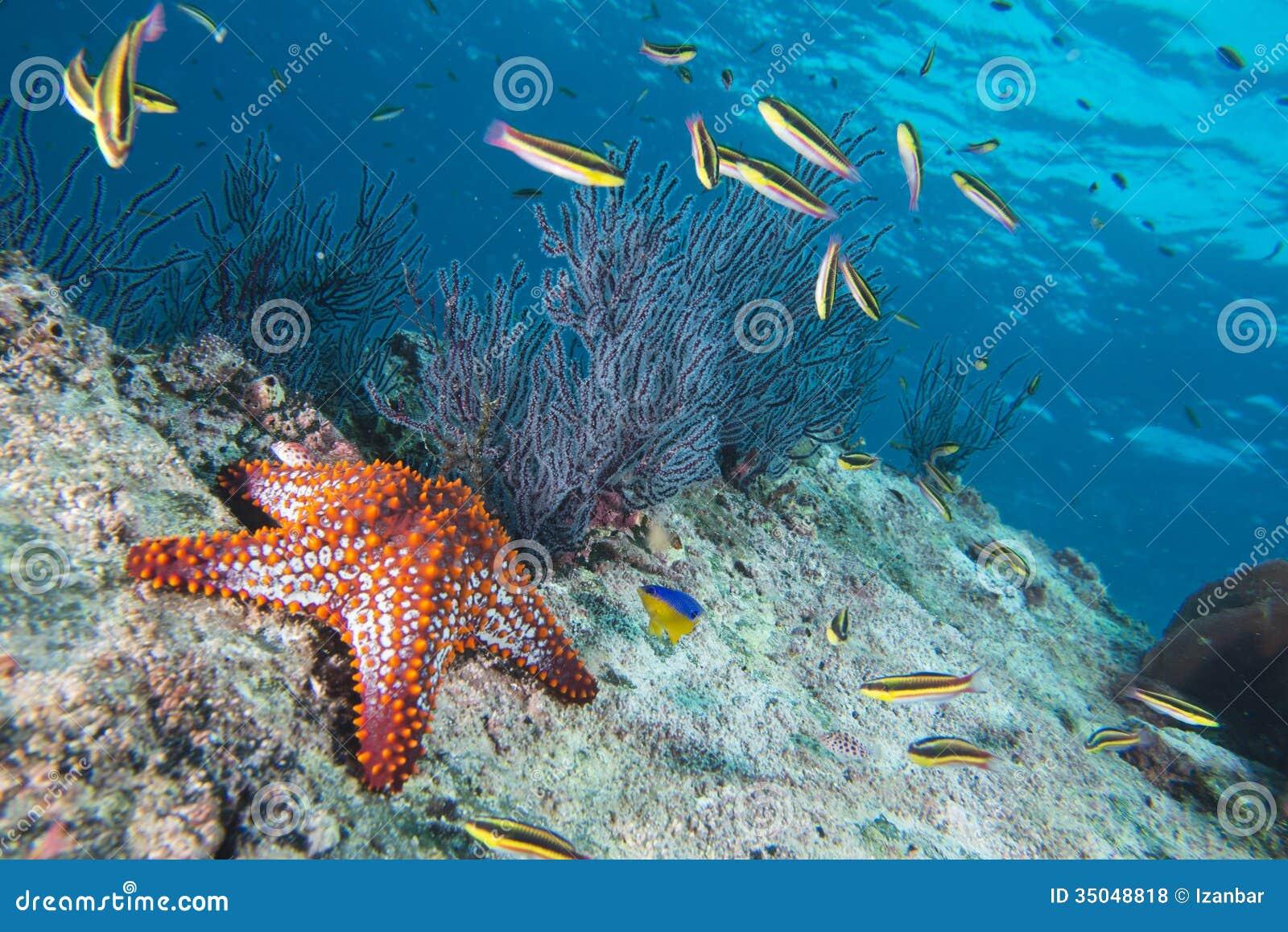 Stelle di mare in un paesaggio subacqueo variopinto della for Disegni di paesaggi di mare