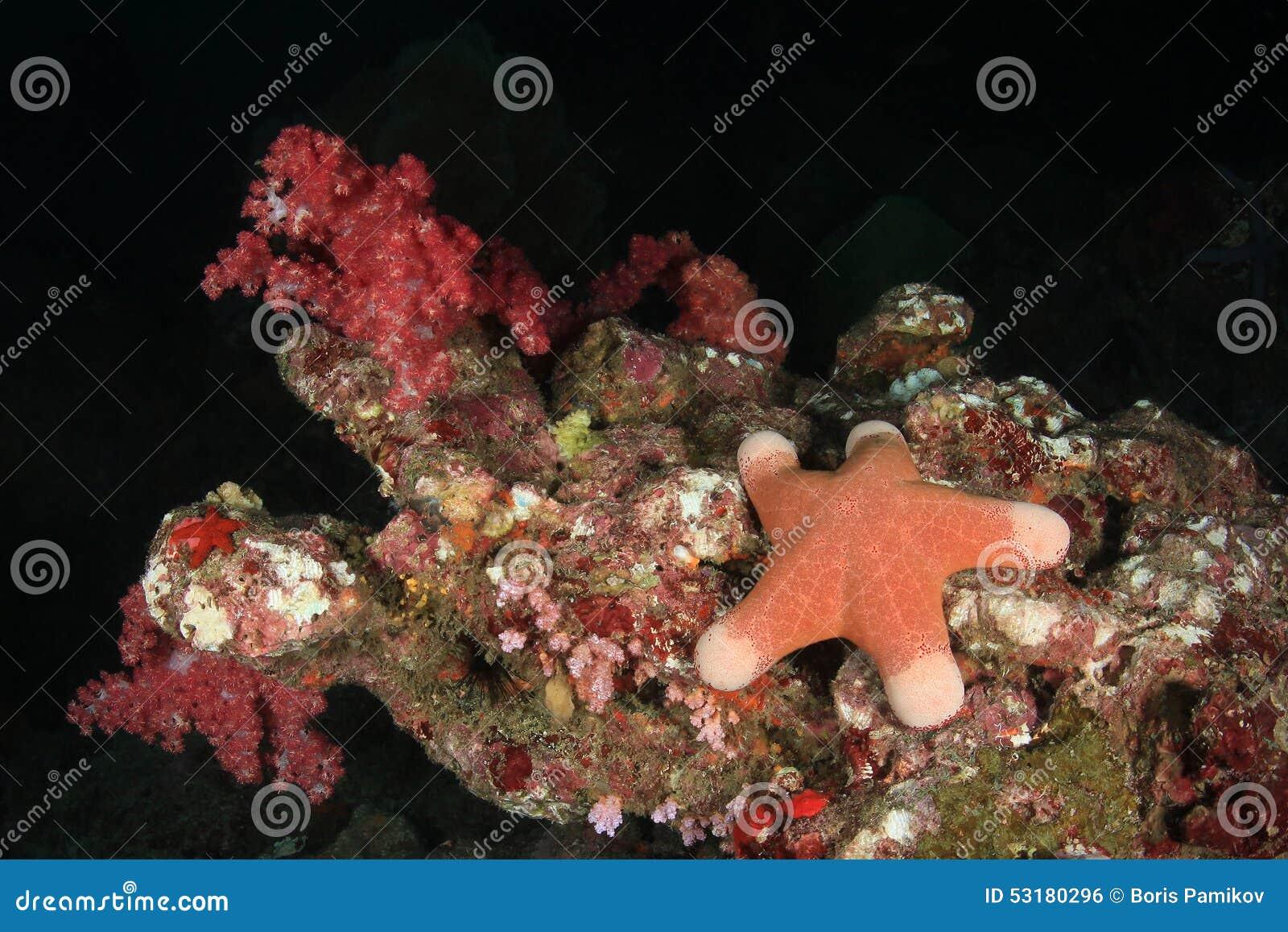 Stelle marine sotto acqua sul fondo del mare delle Andamane, Tailandia