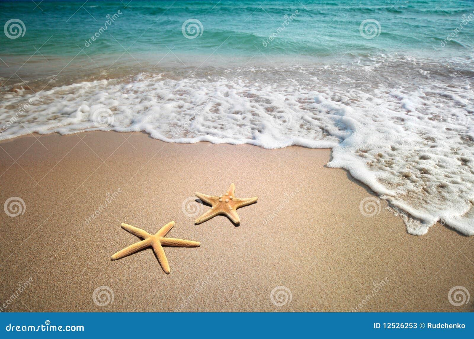 Stelle marine su una spiaggia