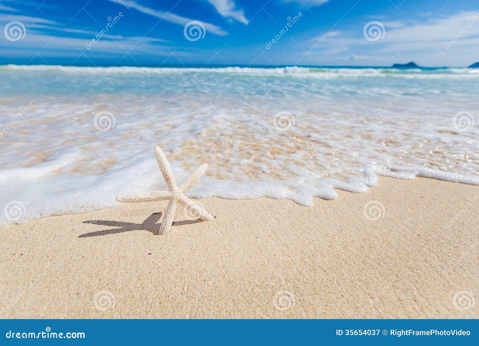 Stelle marine sulla spiaggia fotografia stock libera da for Disegni di casa sulla spiaggia tropicale