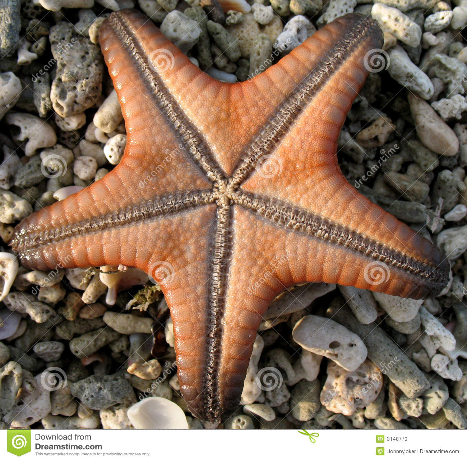 Stelle marine sulle pietre di corallo