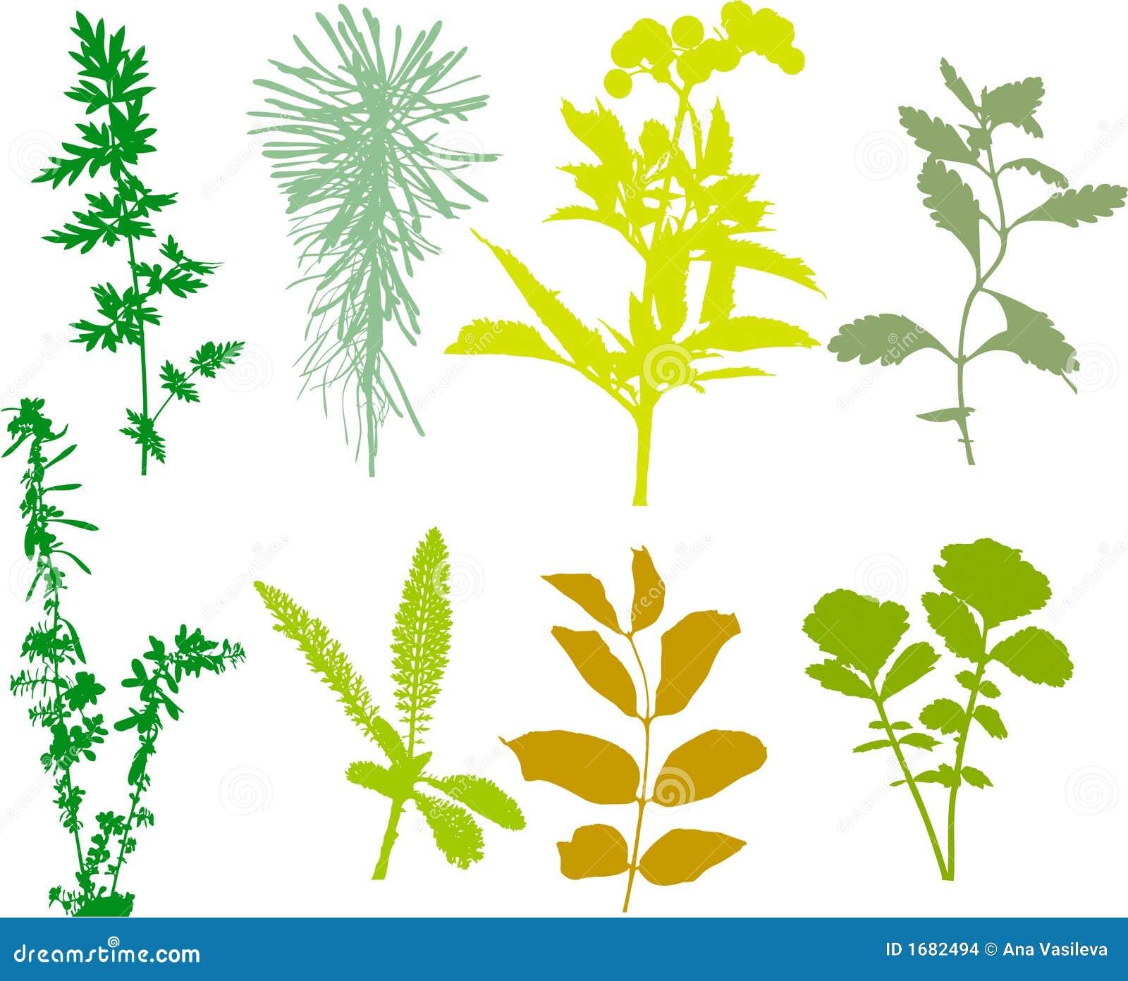 Stellen Sie Anlagen, Kräuter, Blätter - der Vektor auf, verfolgt