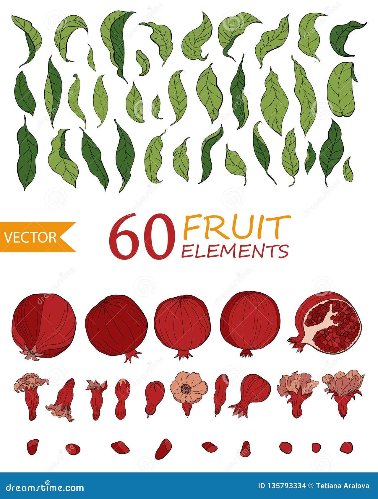 Stellen Sie von 60 Granatapfelelementen, -blumen und -blättern ein Handgezogene Fruchtart Vektor