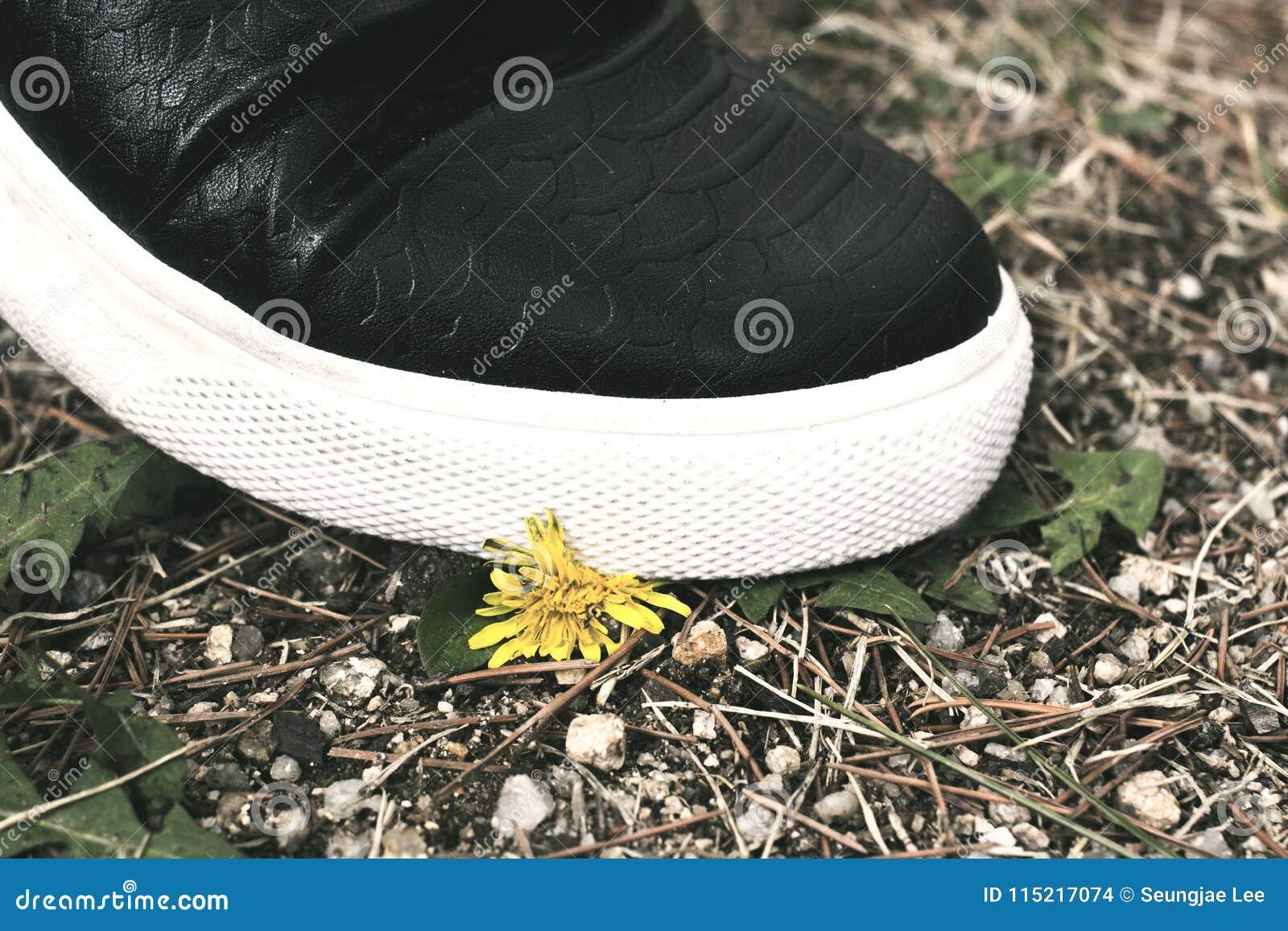 Stempeln hinunter die kleine Blume Gewalttätigkeitskonzeptphotographie