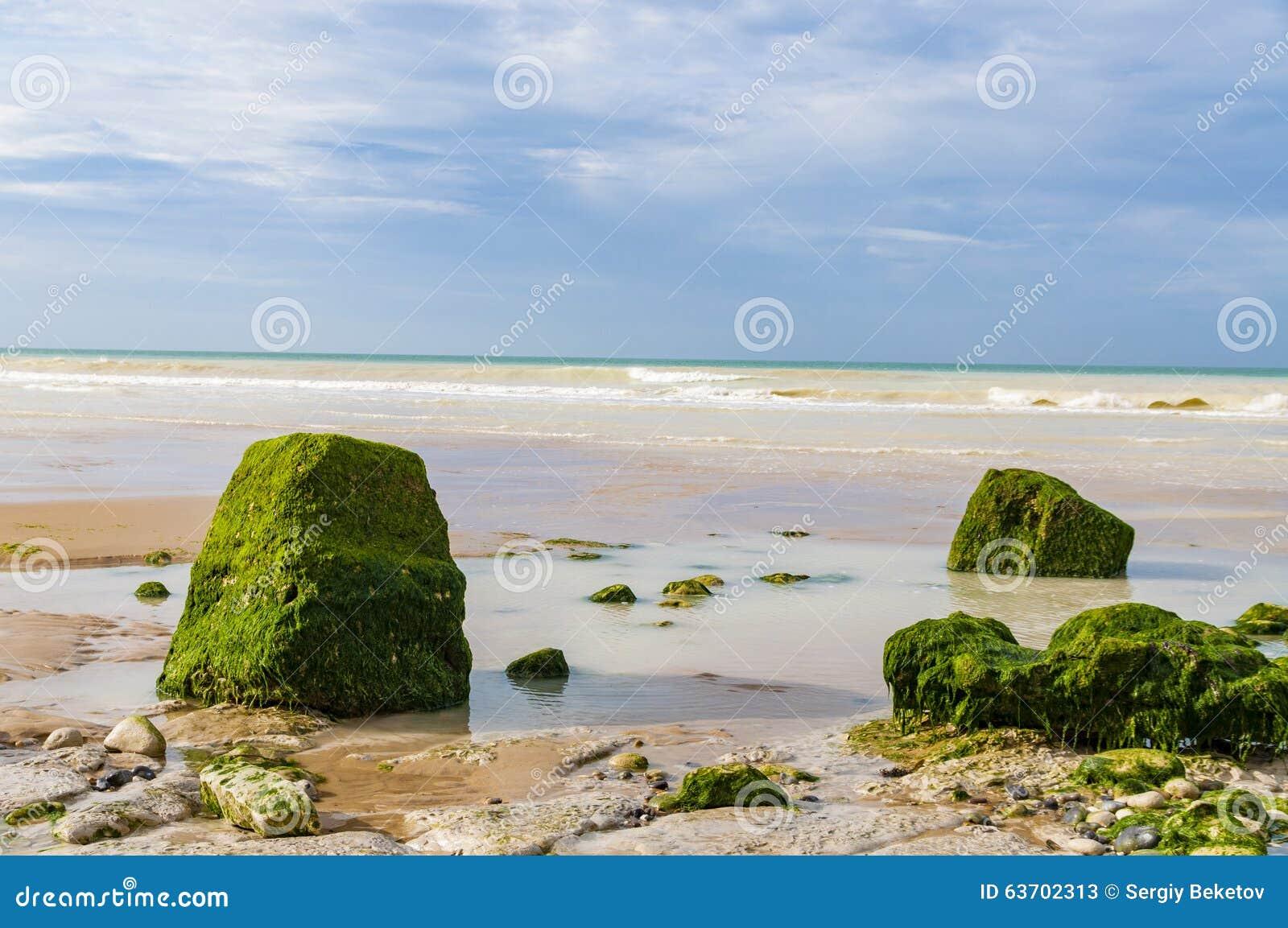 Stenar som täckas av alger som ligger på kusten, skjuld Opale, Frankrike