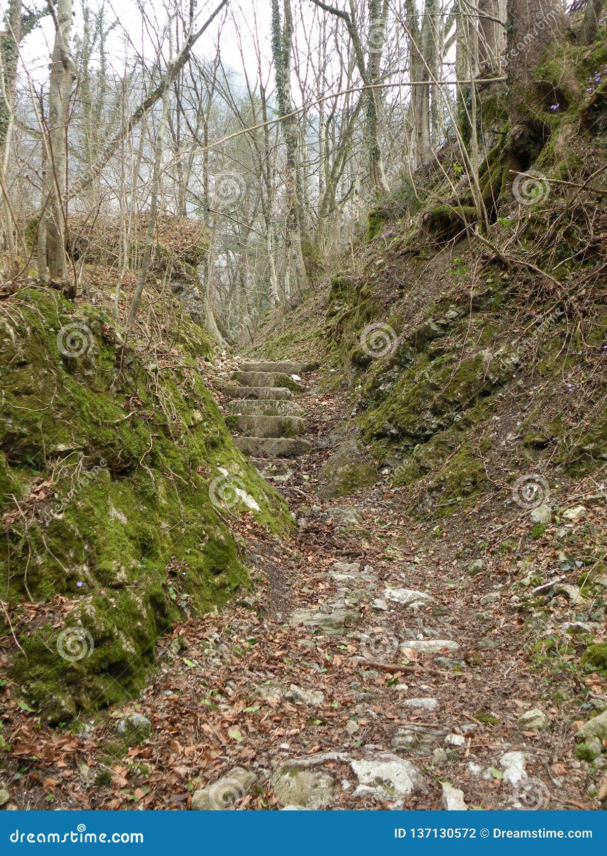 Stenen en aardeweg door de bos, gevallen die bladeren ter plaatse, rotsen met mos worden behandeld, stil, stil, de herfstlandscha