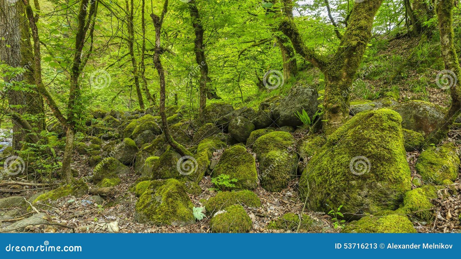 Stenen met mos in het bos worden behandeld dat