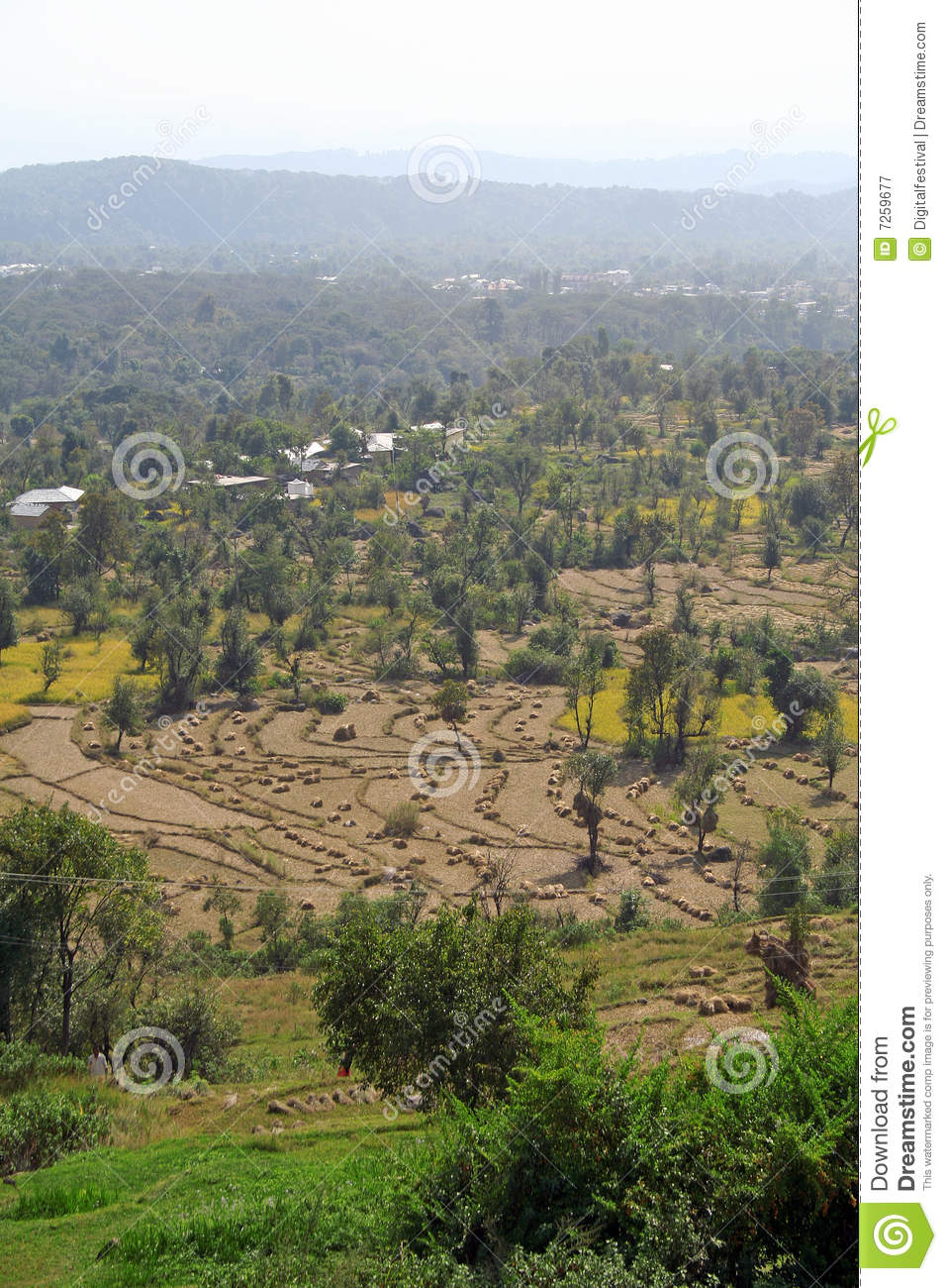Step farms and terrace fields of kangra india royalty free for Terrace farming in india