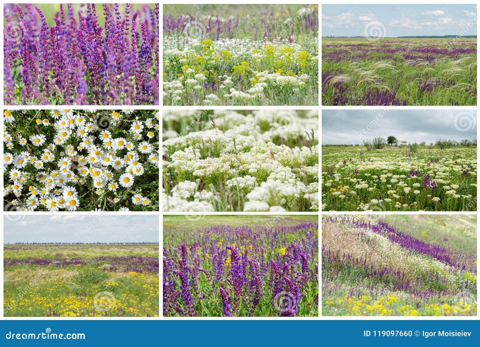 Steppa ucraina di fioritura
