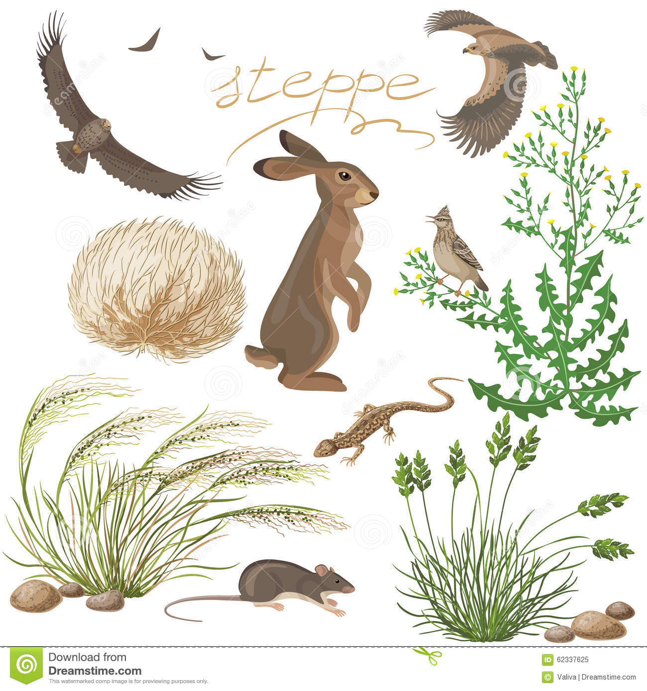 Steppe Plants And Animals Set Stock Vector Image 62337625
