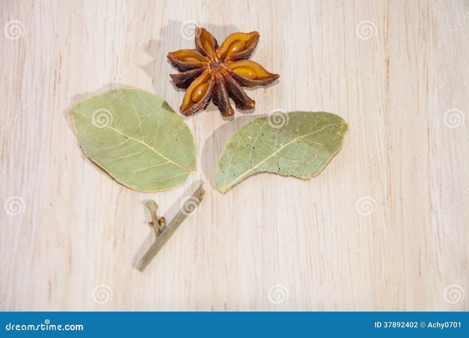 Steranijsplant en Geranium