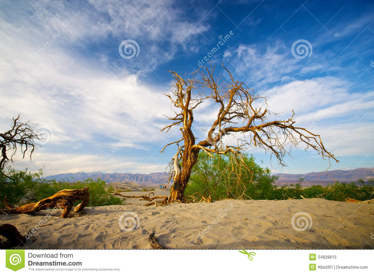 Sterbender Baum in Death Valley
