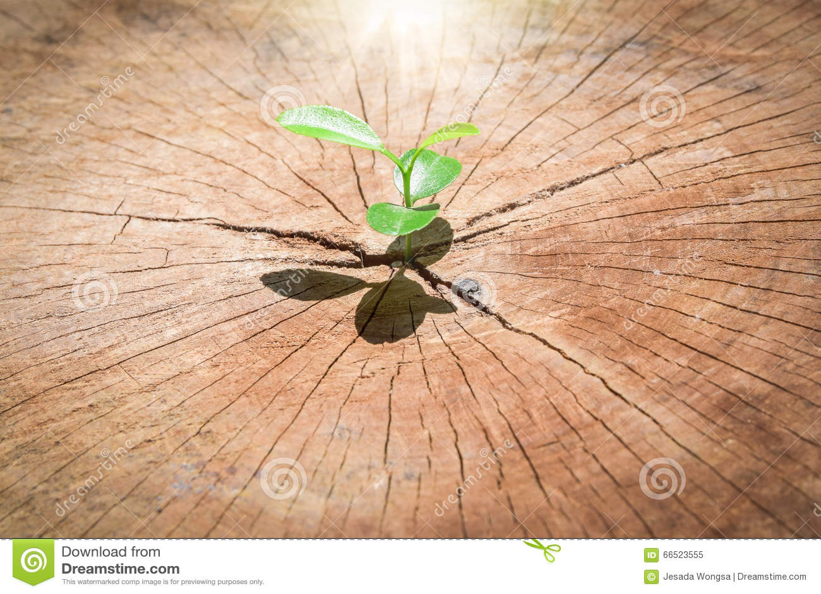 Sterke zaailing die in de boom van de centrumboomstam als Concept de steunbouw een toekomst kweken (nadruk op het nieuwe leven)