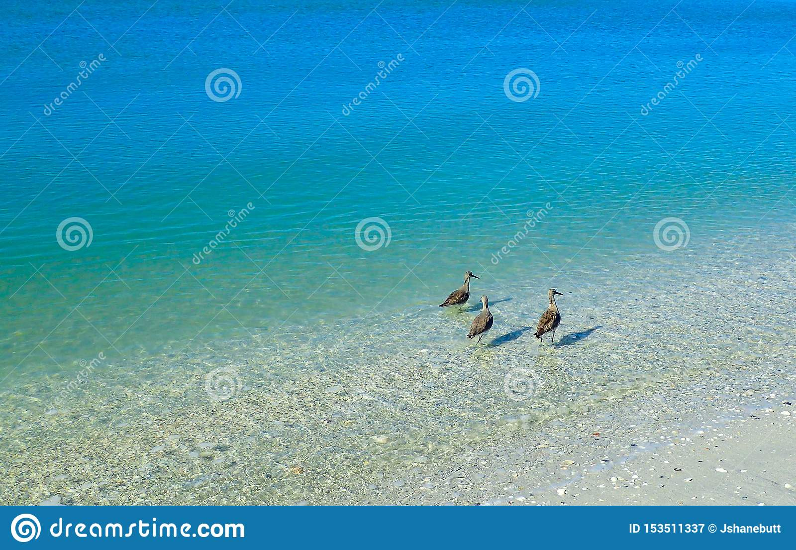 Sternen die zich in de duidelijke blauwe oceaan bevinden die voedsel zoeken