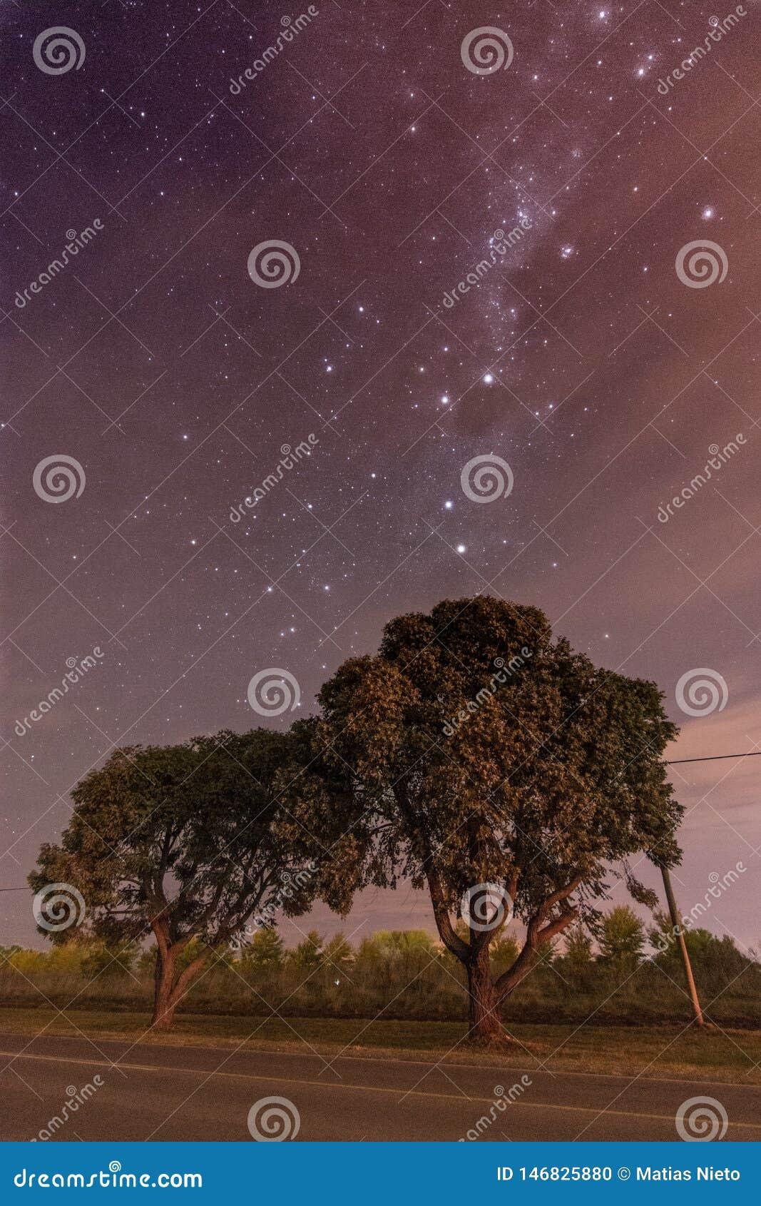 Sterrige astrophotography van de nachthemel met bomen onder de sterren