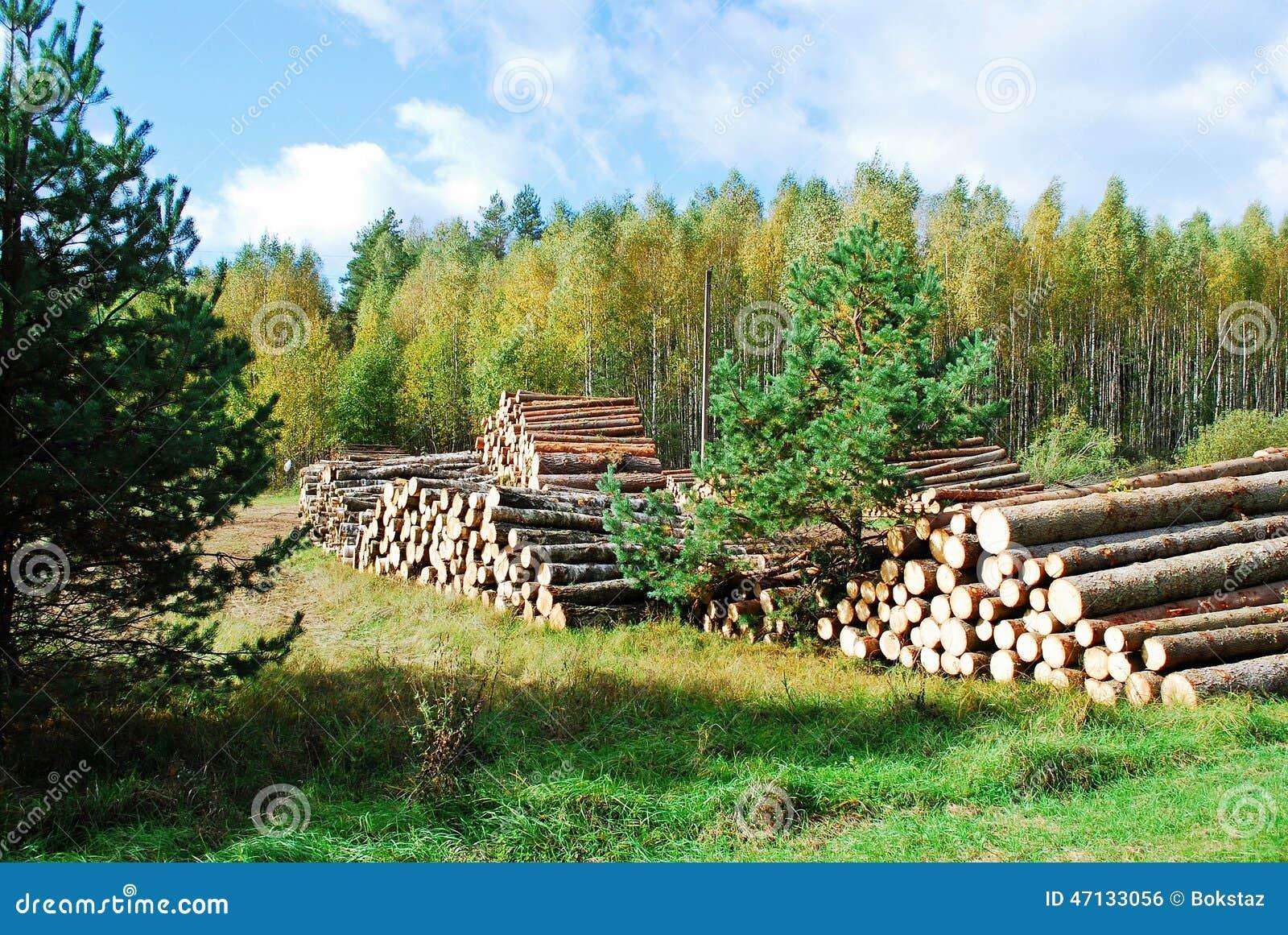 Sterta przygotowany drewno w europejskim lesie