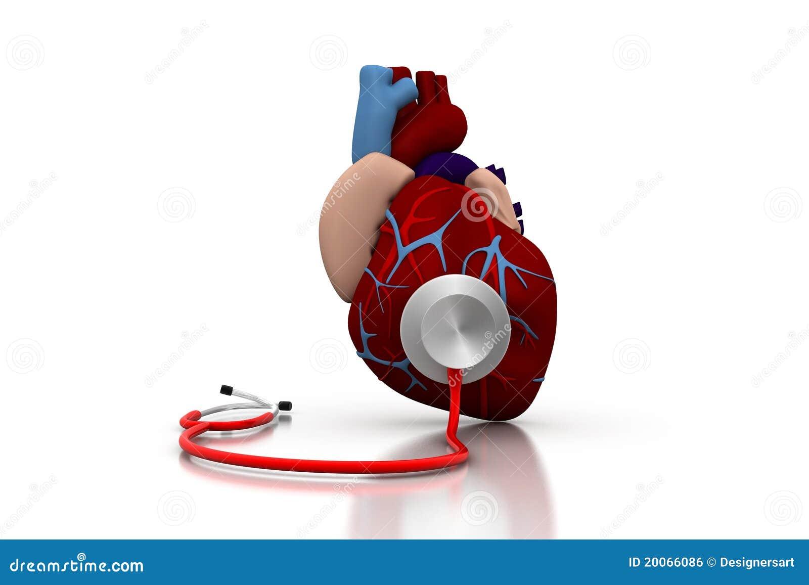Stethoscope On A Heart Stock Illustration Image Of Exercise 20066086