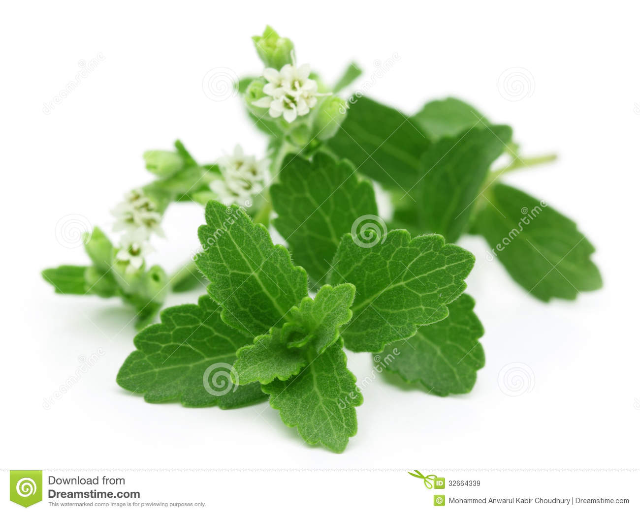 stevia alternate white sugar 15 alternatives to white sugar it has zero calories and isn't harmful to your teeth like sugar stevia by itself doesn't have a very long shelf life.