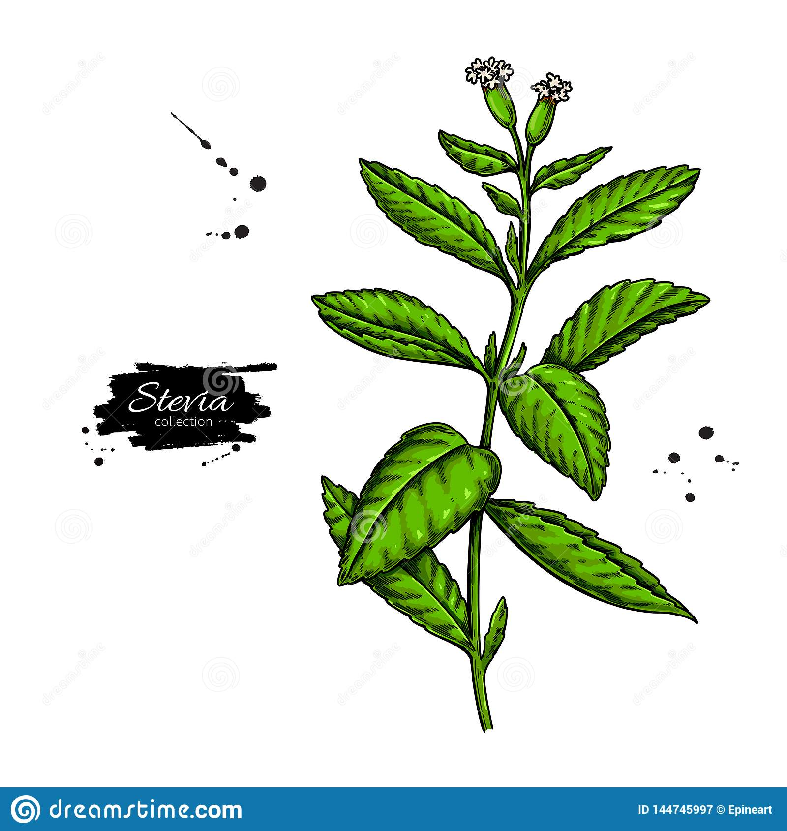 Stevia Flower Vector Drawing  Herbal Sketch Of Sweetener Sugar