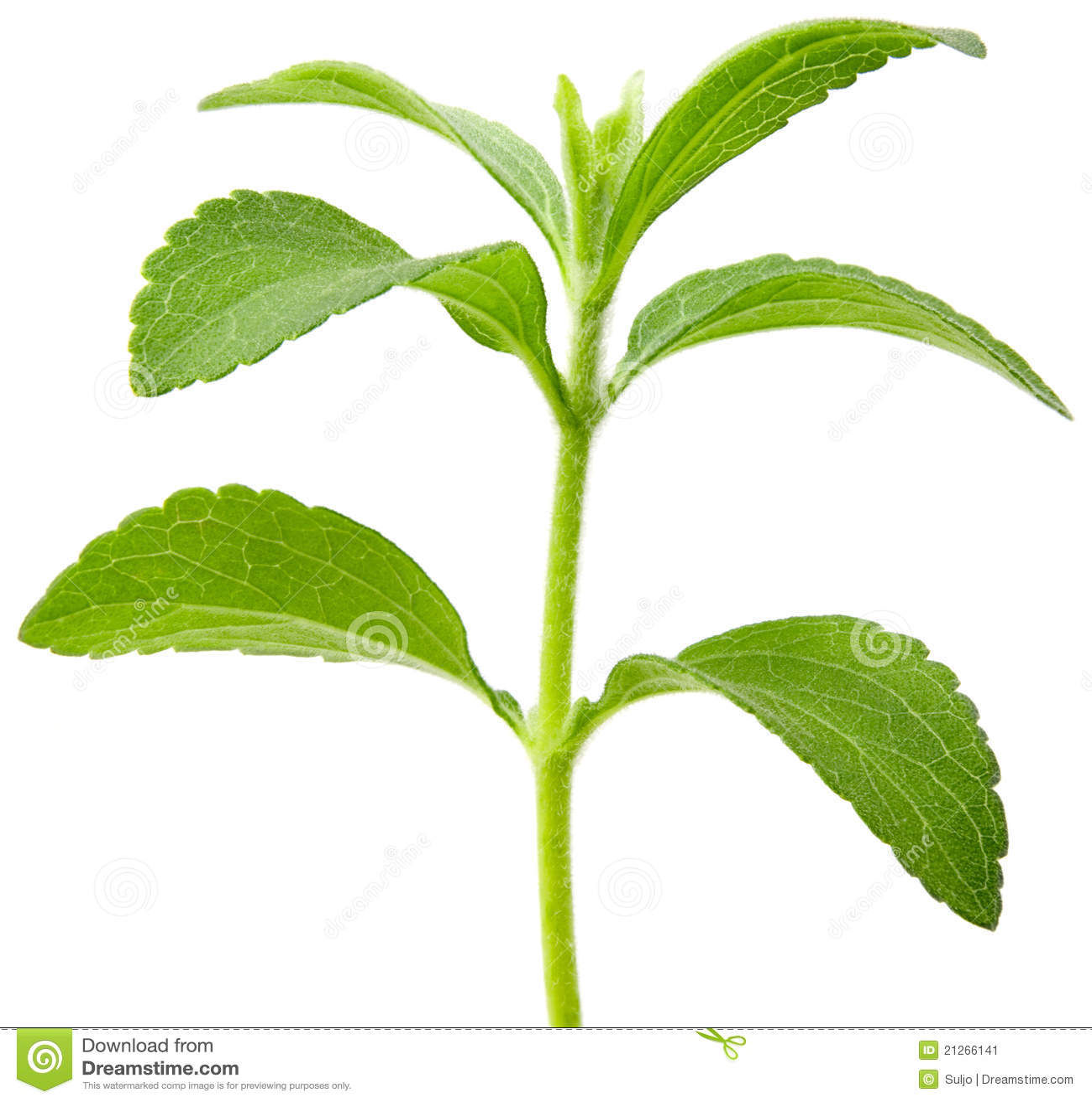 stevia plant cutout stock image image 21266141. Black Bedroom Furniture Sets. Home Design Ideas