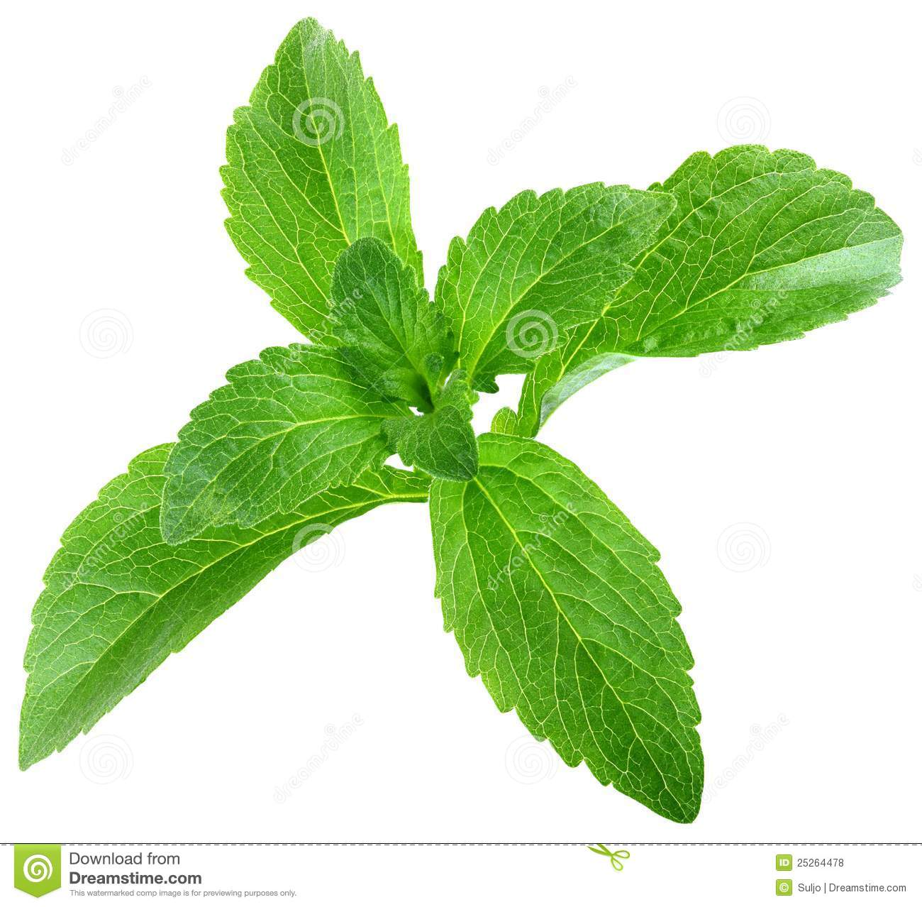 stevia rebaudiana leafs cut out royalty free stock photos. Black Bedroom Furniture Sets. Home Design Ideas