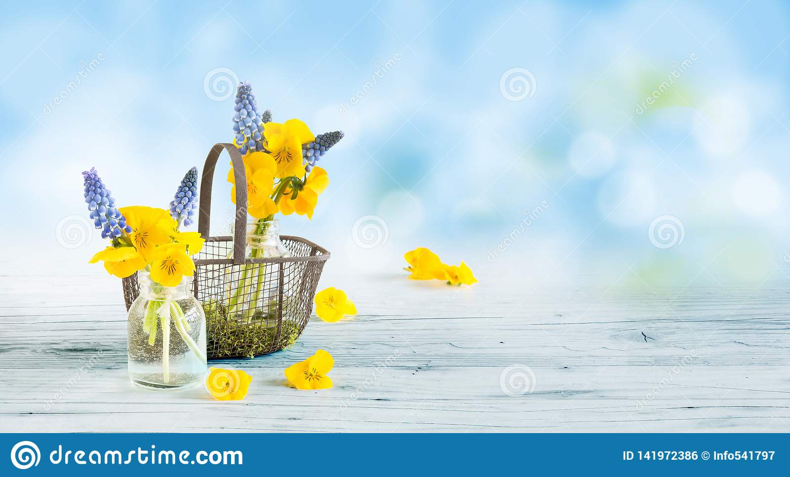 Pansies and grape hyacinths on a wooden base as greeting card