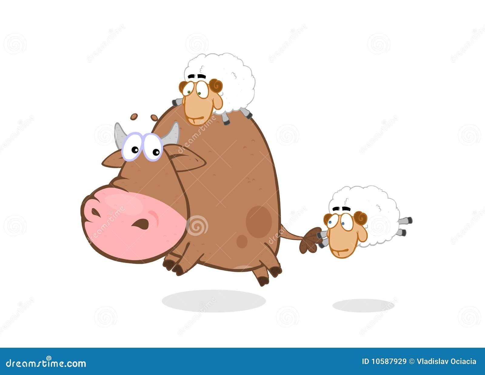 Stier & schapen