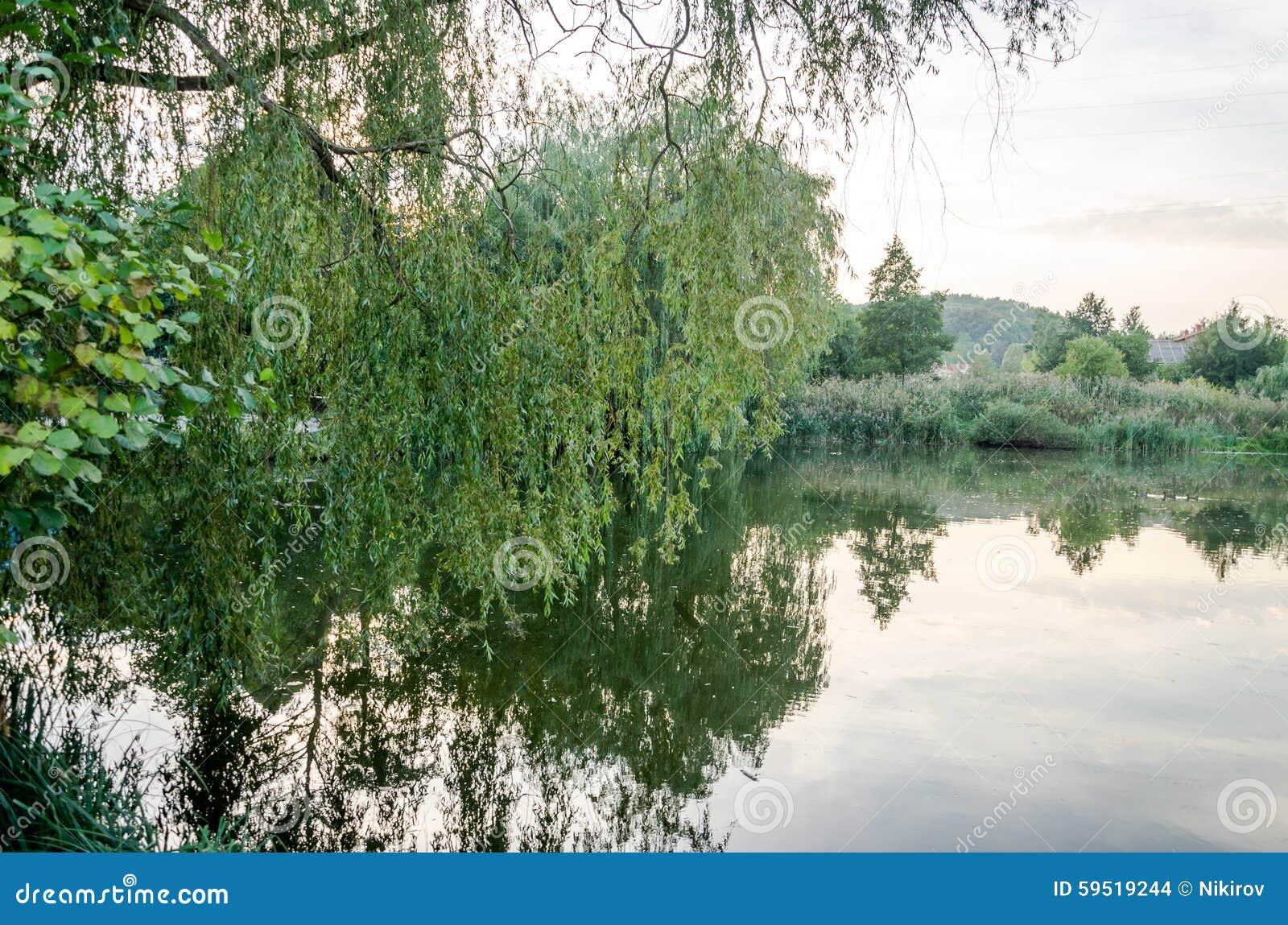 Stil bosdiemeer met algen door bomen struiken en riet worden