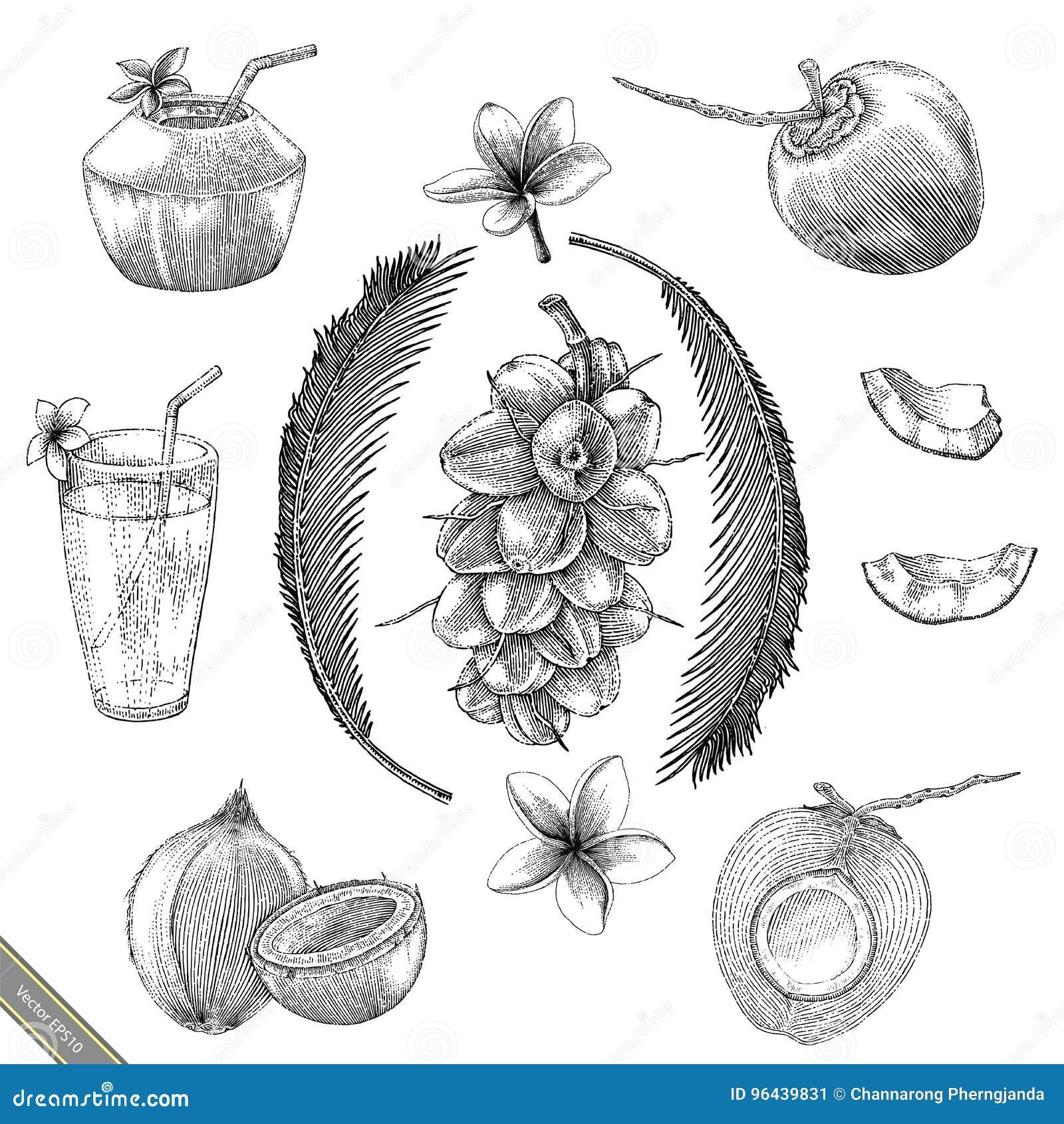 Stil för tappning för teckning för kokosnötsamlingshand