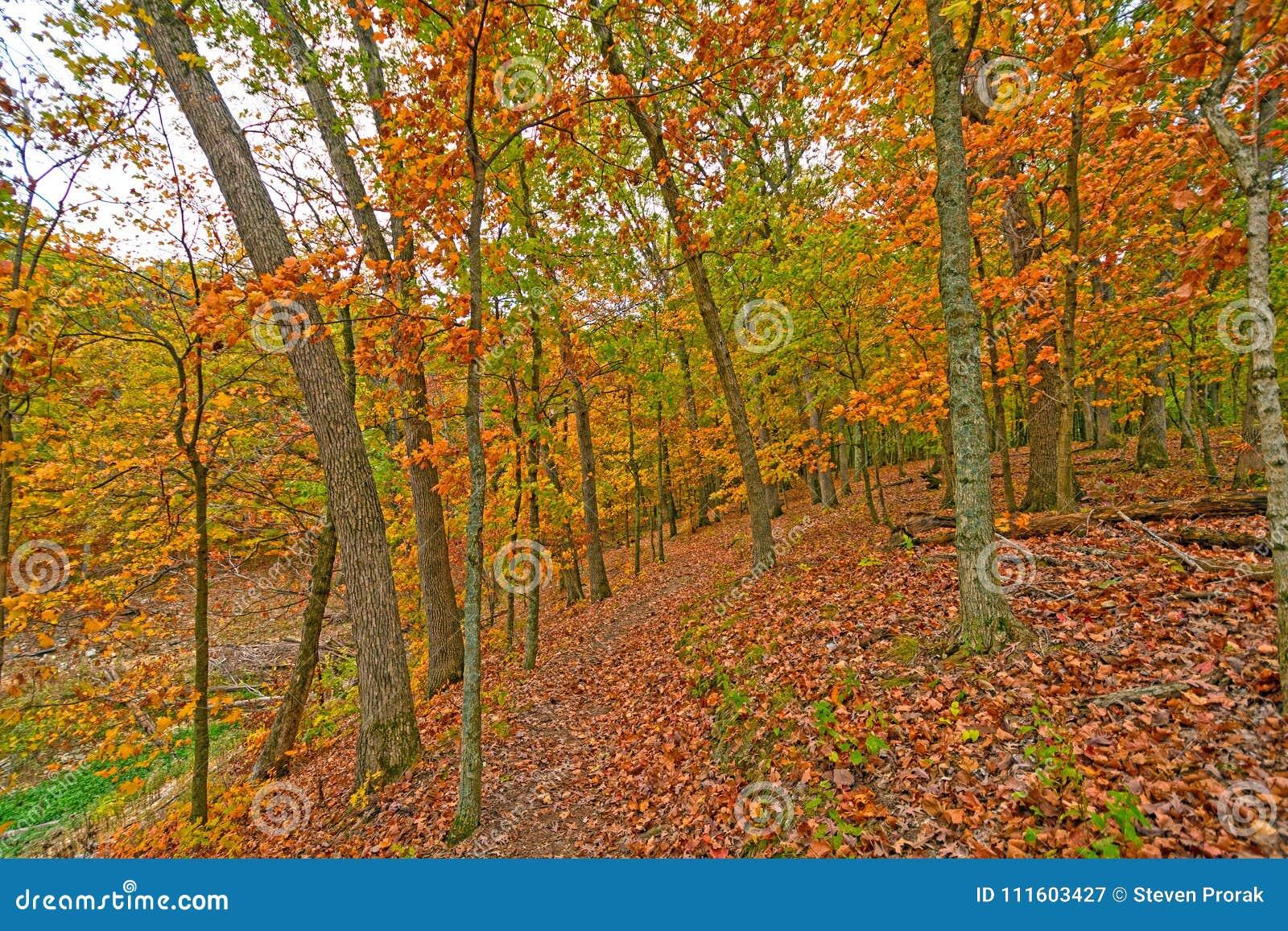 Stil Weg in de herfst Bos