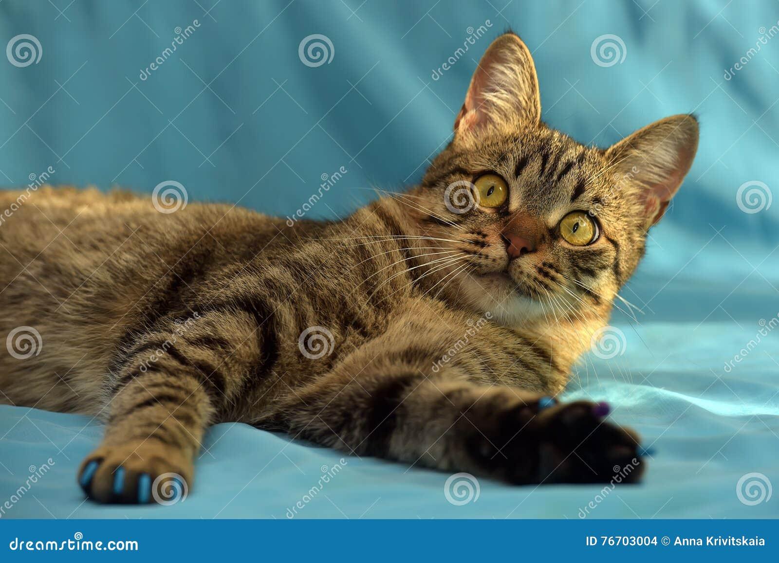 Stilig ung strimmig kattkatt