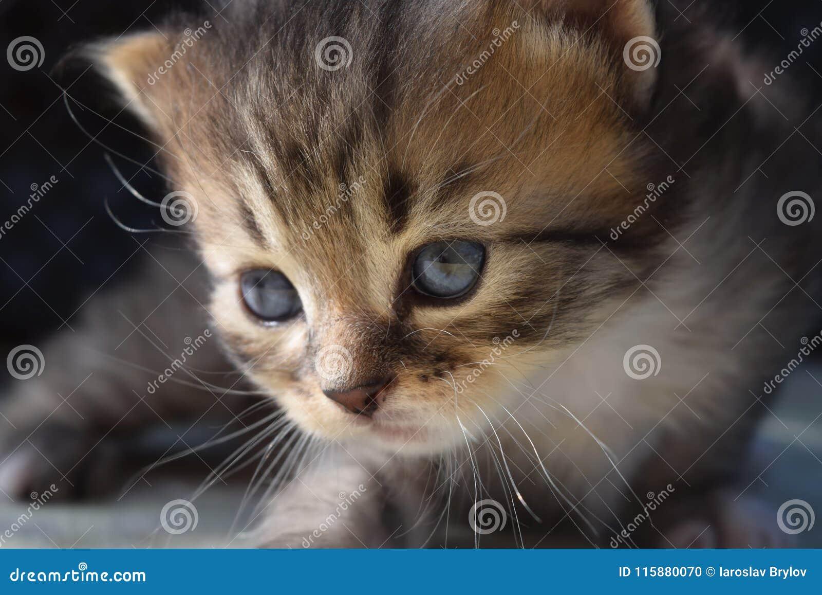 Stiligt en liten kattunge