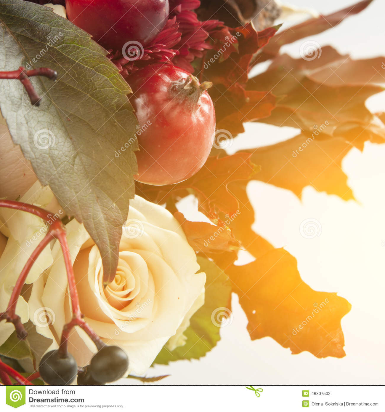 Still Life With Autumn Apples, Rose And Wild Grape Stock Photo - Image ...